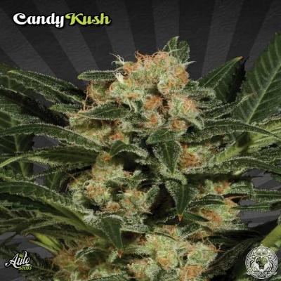 Image of Candy Kush