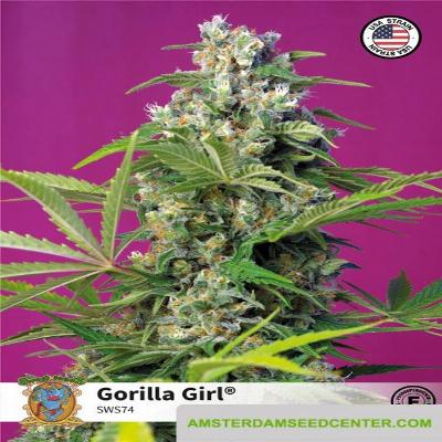 Image of Gorilla Girl seeds