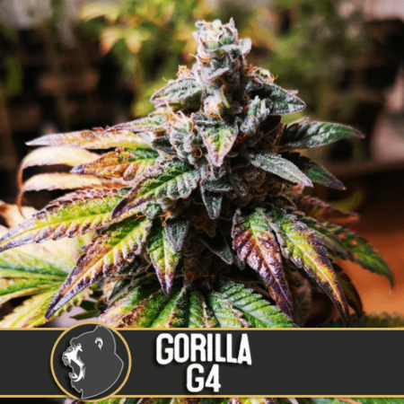 Image of Gorilla Glue No 4