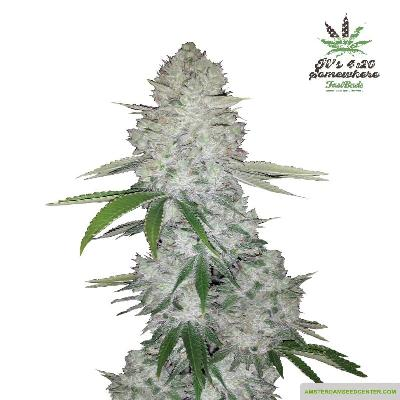 Image of Gorilla Glue seeds