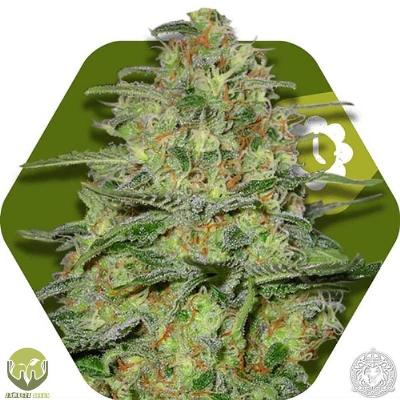 Image of Green Monster seeds