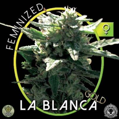 Image of La Blanca Gold seeds