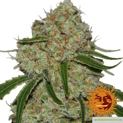 Image of Phantom OG