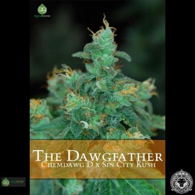 Image of The Dawgfather seeds