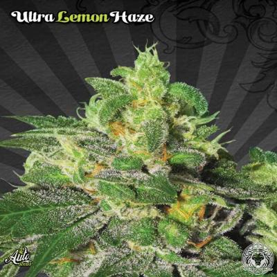Image of Ultra Lemon Haze