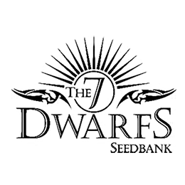 Image of 7 Dwarfs Seedbank