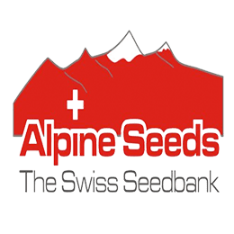 Image of Alpine Seeds