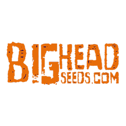 Image of Big Head Seeds