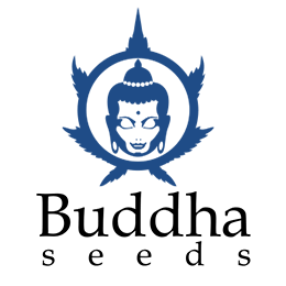 Image of Buddha Seeds