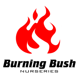 Image of Burning Bush Nurseries