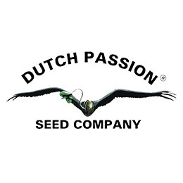 Image of Dutch Passion