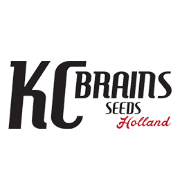 Image of KC Brains