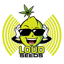 Image of Loud Seeds