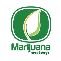 Image of Marijuana Seedshop