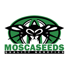 Image of Mosca Seeds