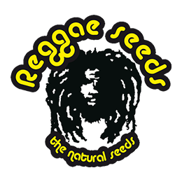 Image of Reggae Seeds