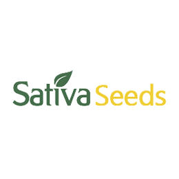 Image of Sativa Seeds