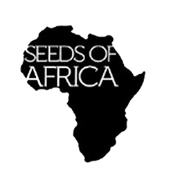 Image of Seeds of Africa