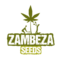 Image of Zambeza Seeds